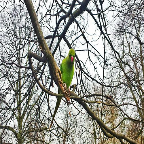 Parakeet Hydepark whatsupcourtney