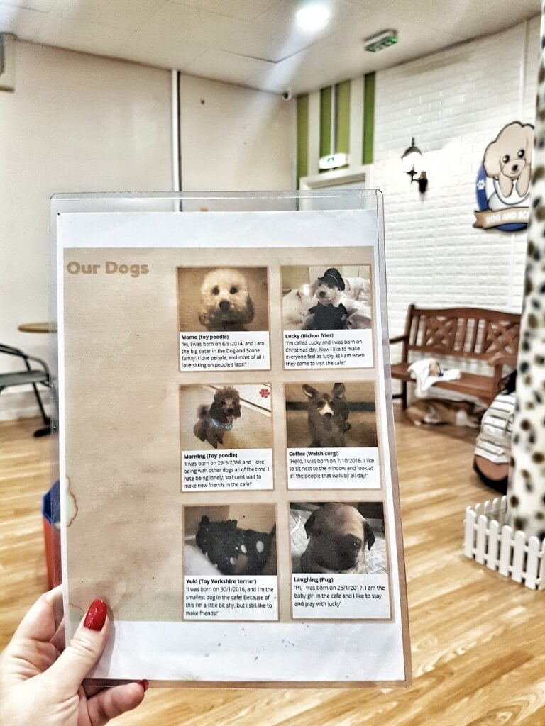 Dog & Scone Dog Cafe Newcastle ->www.whatsupcourtney.com #dog #dogcafe