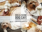 Dog & Scone Dog Cafe Newcastle