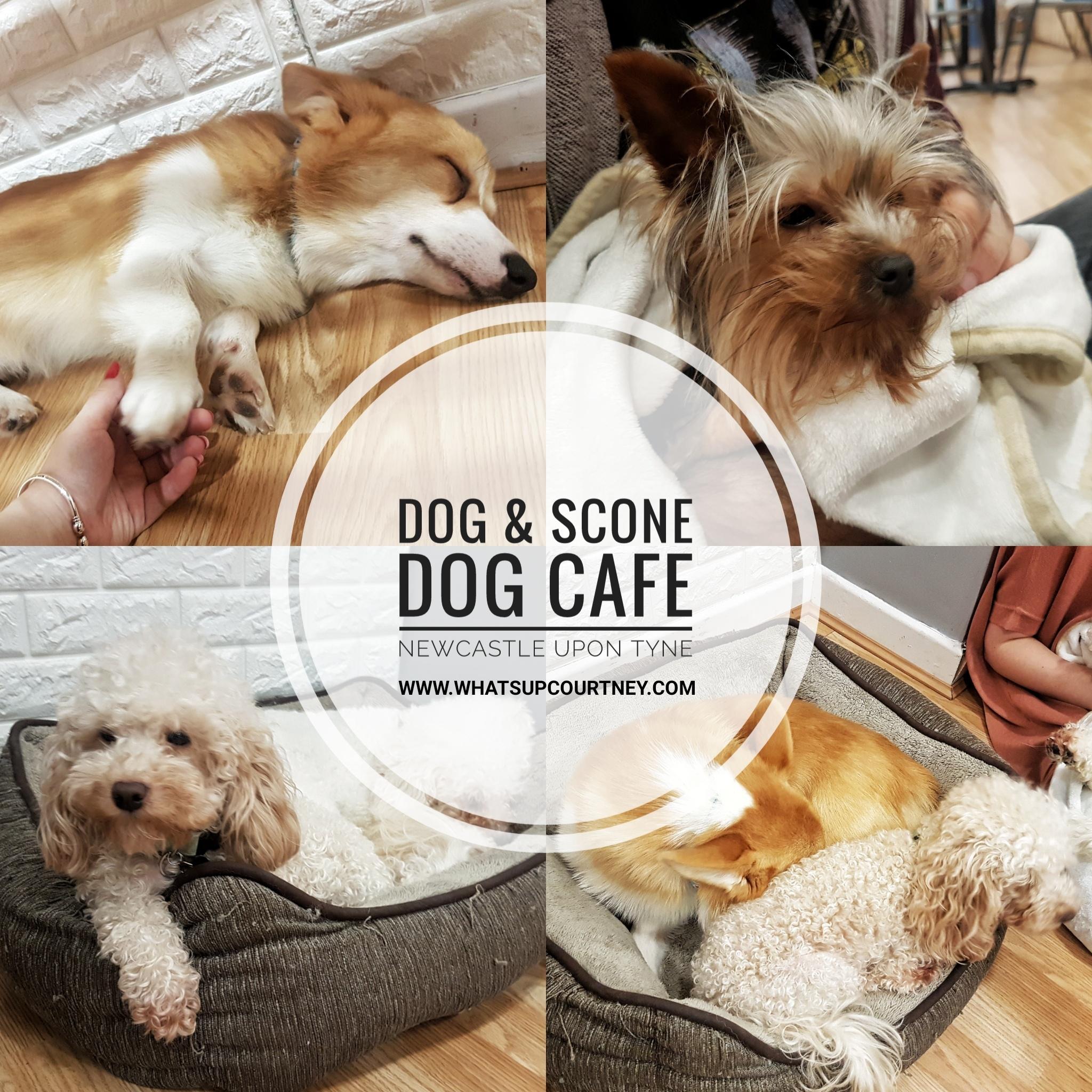 Dog & Scone Dog Cafe Newcastle
