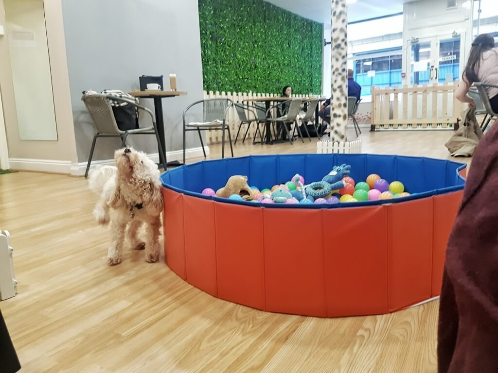 Dog & Scone Dog Cafe Newcastle ->www.whatsupcourtney.com #dog #dogcafe #poodle