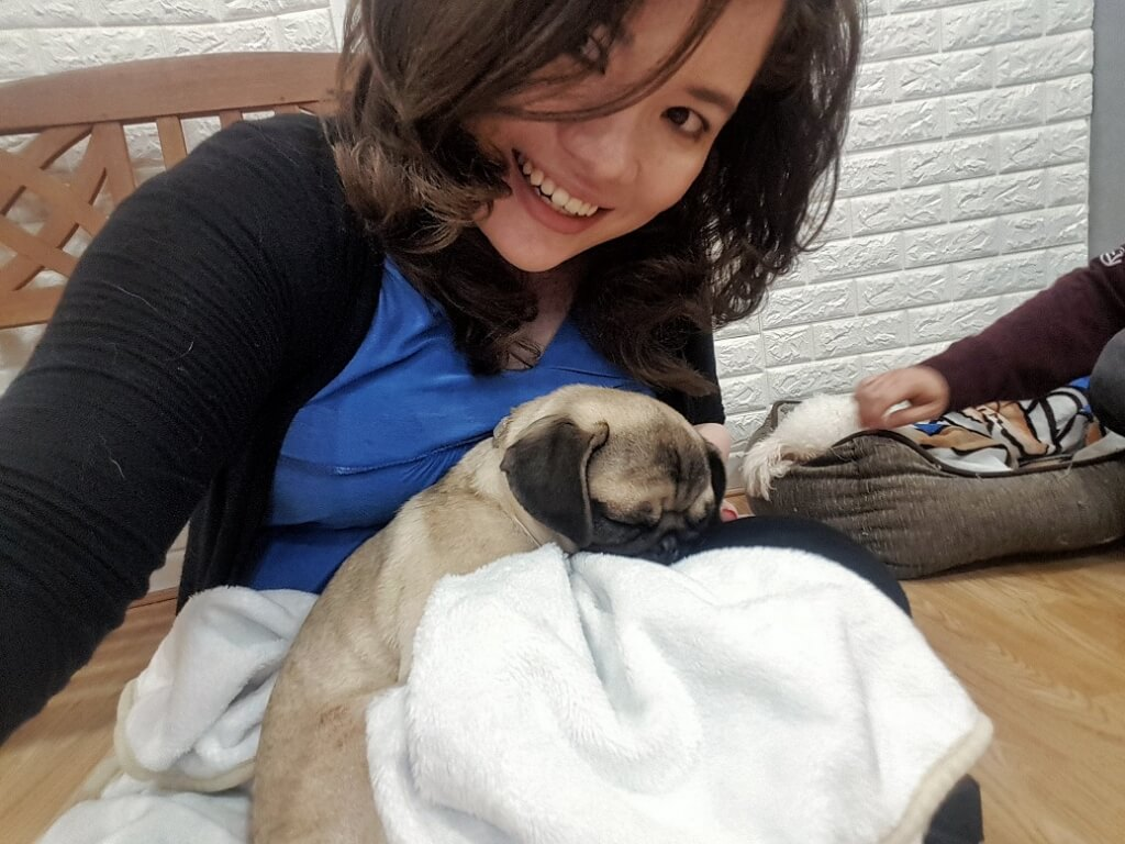 Dog & Scone Dog Cafe Newcastle ->www.whatsupcourtney.com #dog #dogcafe #pug