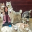 Photo with a group of huskies at the husky cafe Truelove at Neverland - read more at whatsupcourtney.com #huskies #husky #bangkok #thailand #travel #siberianhusky
