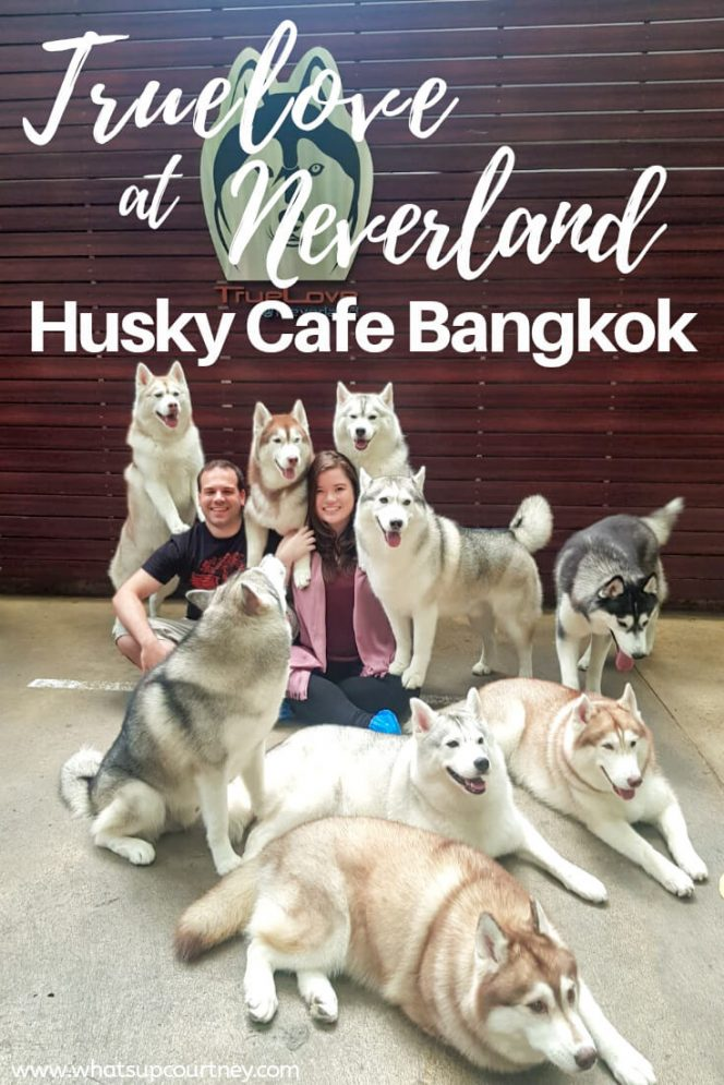 Group photo with the huskies at the husky cafe Truelove at Neverland - read more at whatsupcourtney.com #huskies #husky #bangkok #thailand #travel #siberianhusky