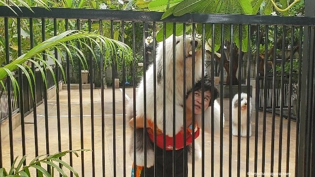 Joshi the English Sheepdog saying hello before the customers enter Truelove at Neverland Bangkok Thailand Huskies at the husky cafe Truelove at Neverland - read more at whatsupcourtney.com #englishsheepdog #dog #bangkok #thailand #travel #siberianhusky