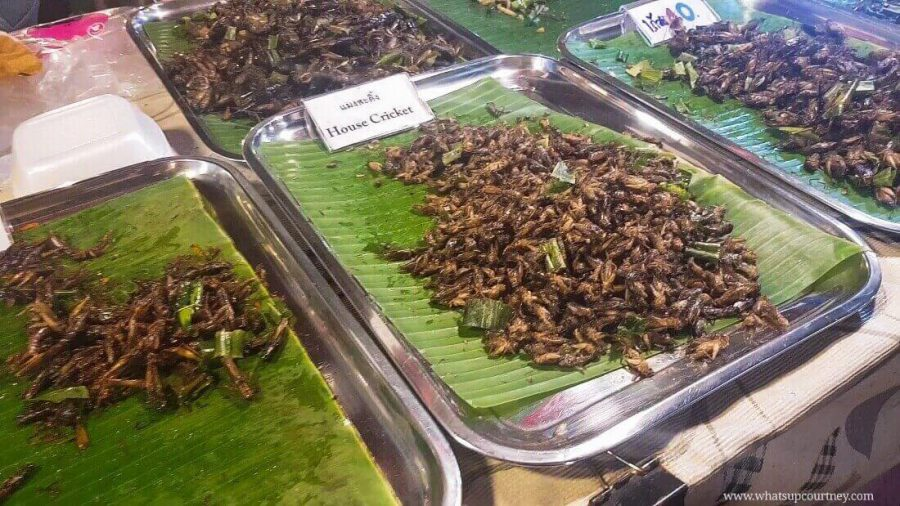 A tray of insects from a night market in Bangkok from www.whatsupcourtney.com | #travel #bangkok #thailand
