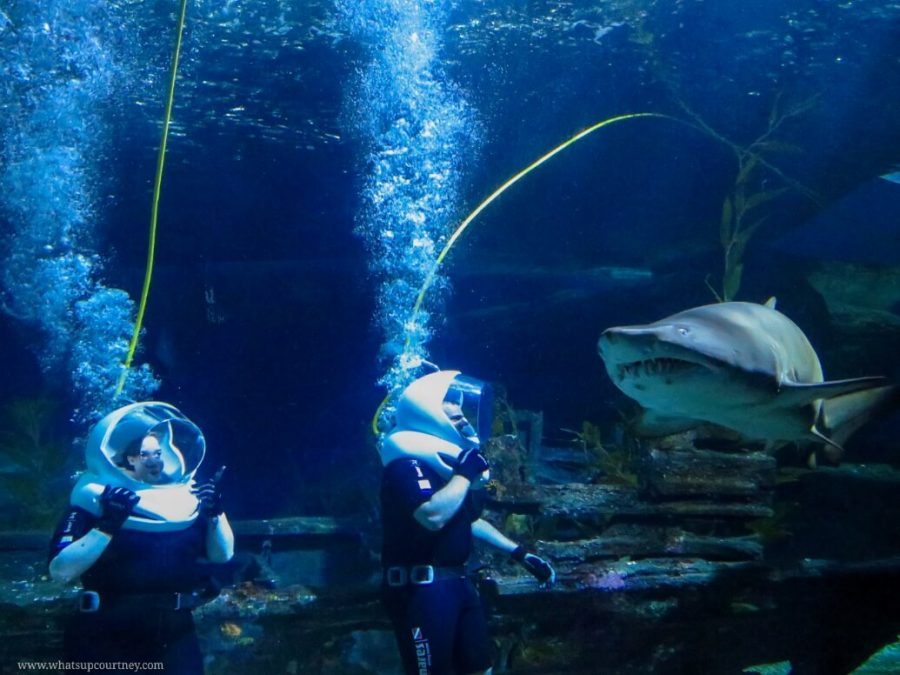 Walking underwater with the sharks at Bangkok's Sealife centre | heywhatsupcourtney | #travel #bangkok #thailand