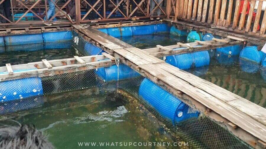 Fish farm at the Geoforest, part of the boat tour | heywhatsupcourtney